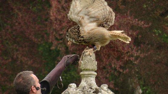 Pleugueneuc, França: Spectacle de fauconnerie
