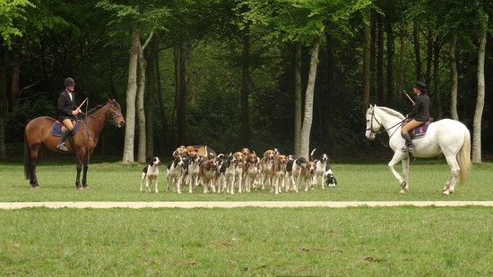 Pleugueneuc, França: Spectacle avec les chiens