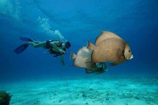 MUSA Cancún (Museo Subacuático de Arte): Chegando no MUSA a 8m de profundidade