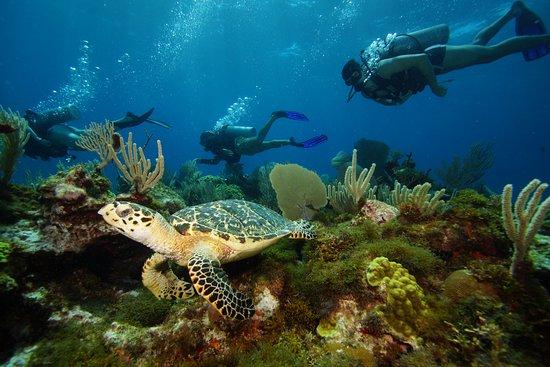 MUSA Cancún (Museo Subacuático de Arte): Linda tartaruga nos corais