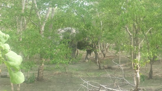 Mole National Park, Ghana: Jeep safari