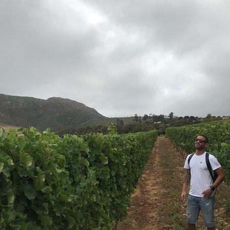 Constantia, Sudáfrica: 🍷