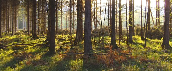 Wye Valley and Forest of Dean: The Forest of Dean