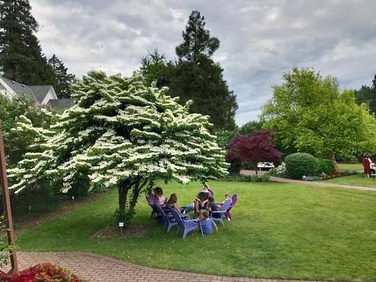 Woodland, WA: Relax in the shade of a lilac tree