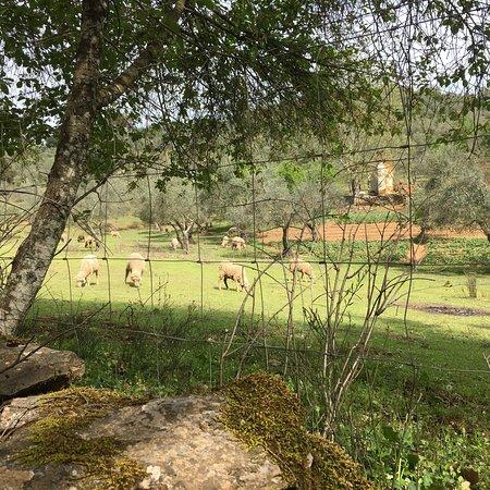 Constantina, สเปน: photo0.jpg
