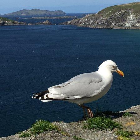 Dunquin, Irlanda: photo0.jpg