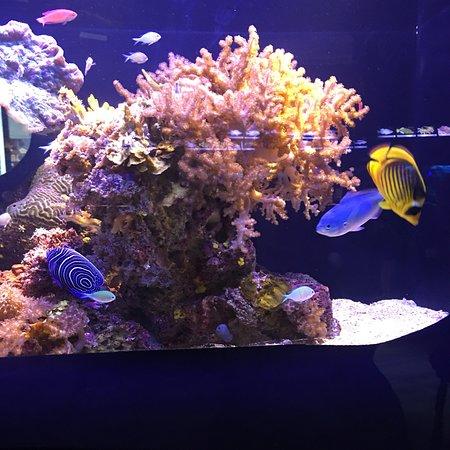 Underwater Observatory Marine Park Φωτογραφία