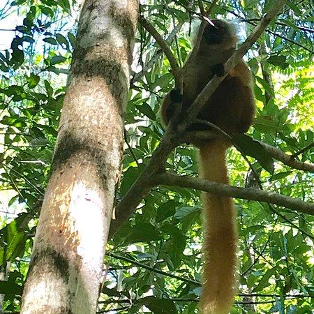 Lokobe Nature Special Reserve : photo5.jpg