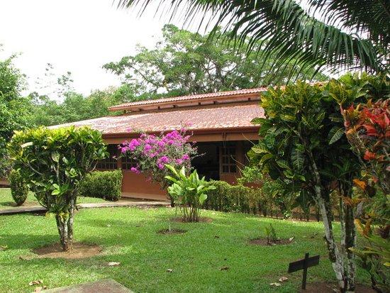 Cano Negro, Costa Rica: Dinin g, bar, lounge