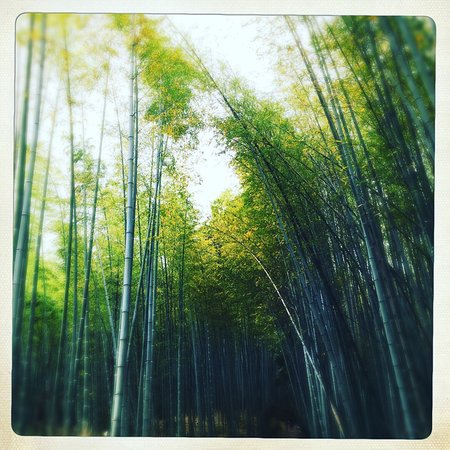 Bamboo Forest Street: photo3.jpg