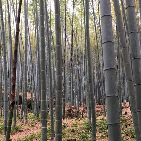 Bamboo Forest Street: photo4.jpg