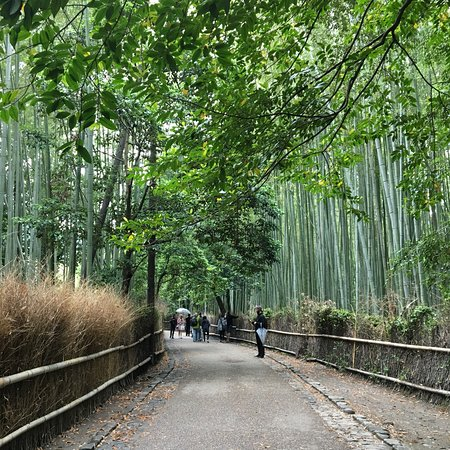 Bamboo Forest Street: photo7.jpg