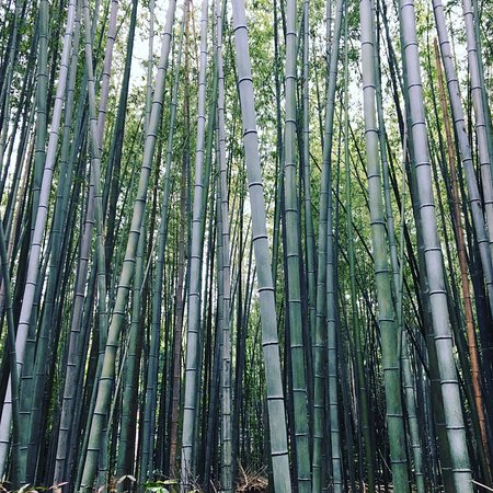 Bamboo Forest Street: photo8.jpg