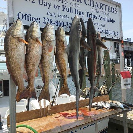 Fish-Finder Charters ภาพถ่าย