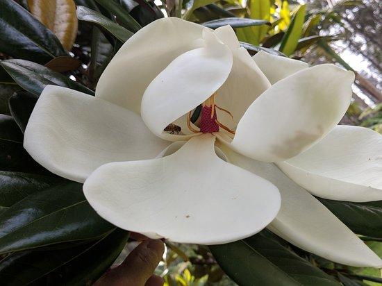 Holualoa, HI: 00000PORTRAIT_00000_BURST20180516112539346_large.jpg