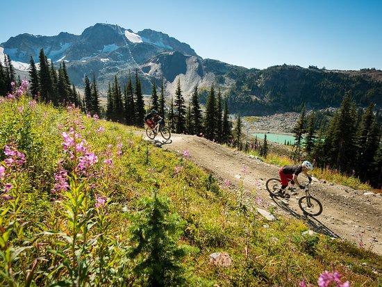 Alpine Biking on Whistler Mountain