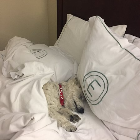 The Elms Hotel and Spa: Rudy loves the Elms!