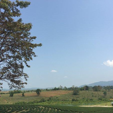 Choui Fong Tea Plantation: photo8.jpg