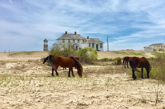Outer Banks Wild Horse Tour