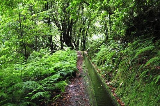 Private VIP Service Madeira Walking...