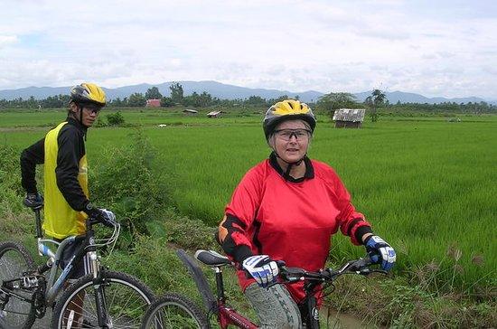 Visões de campo de arroz