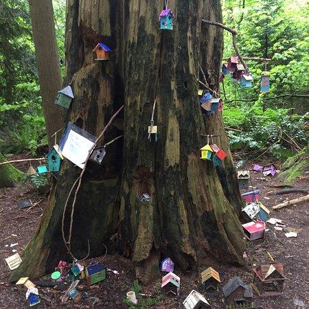 Redwood Park: photo2.jpg