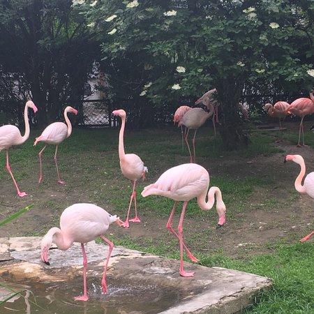 Krakow Zoo (Ogrod Zoologiczny): photo5.jpg