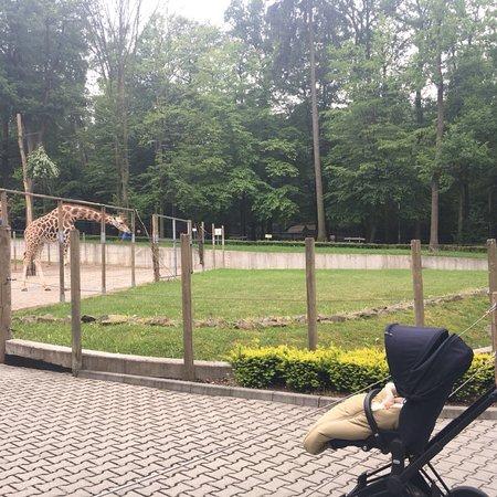 Krakow Zoo (Ogrod Zoologiczny): photo6.jpg