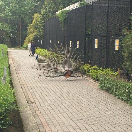 Krakow Zoo (Ogrod Zoologiczny): photo7.jpg