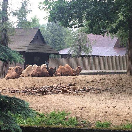 Krakow Zoo (Ogrod Zoologiczny): photo8.jpg