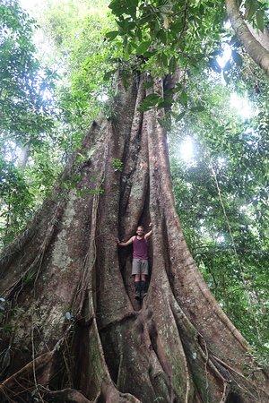 Kutacane, إندونيسيا: Big Tree adventures