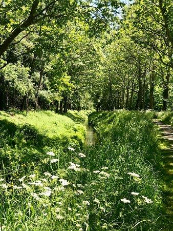 Montferrand, فرنسا: Après le réconfort, l'effort : promenade le long de la Rigole alimentant le canal