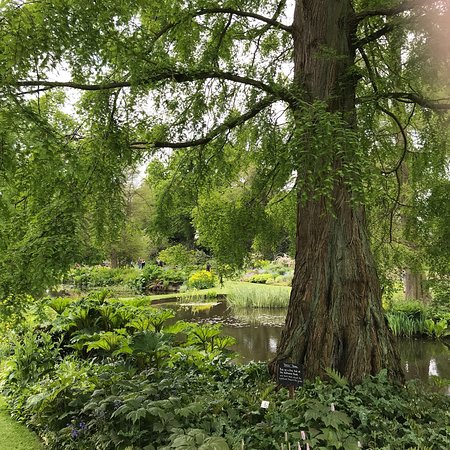 The Beth Chatto Gardens照片