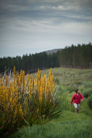 Explore the nature trails available to visitors at Bosman Hermanus