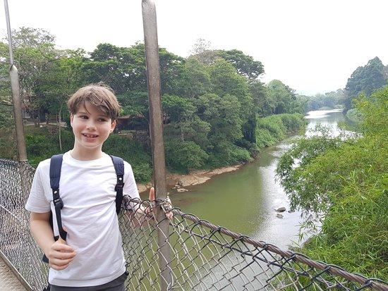 Royal Botanical Gardens: suspension bridge