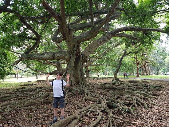 Royal Botanical Gardens: great tree roots