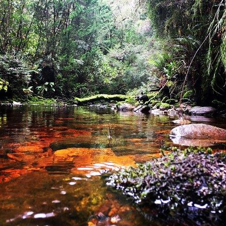Queenstown, Australia: Experience the pristine wilderness of Tasmania's Franklin/Gordon World Heritage Area