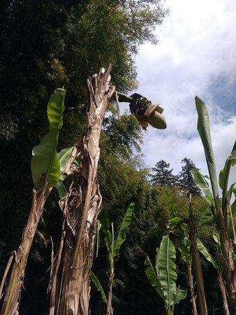 Generargues, Prancis: bananier