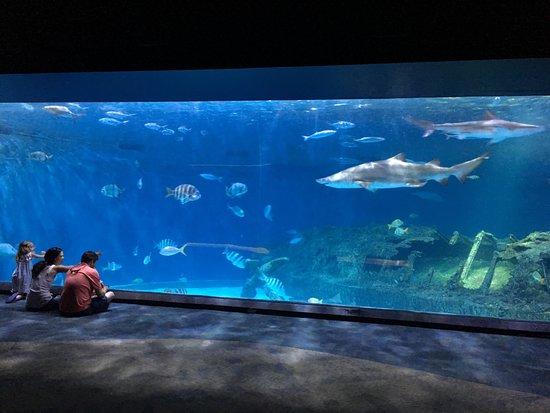 North Carolina Aquarium on Roanoke Island照片