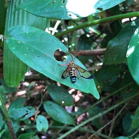 Tortuguero National Park: photo7.jpg