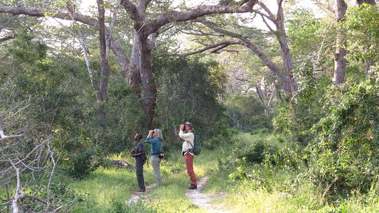 Gede, Kenya: Bird watchers in the Forest