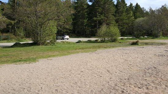 Glenmore Forest Park照片