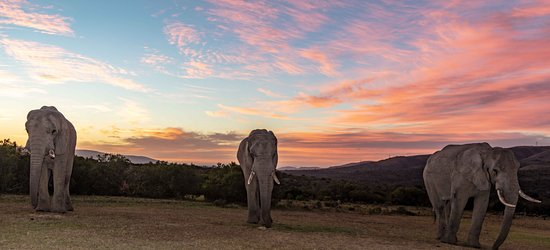 Addo Elephant National Park 이미지