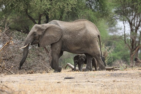 Tarangire National Park, تنزانيا: Baby elephant