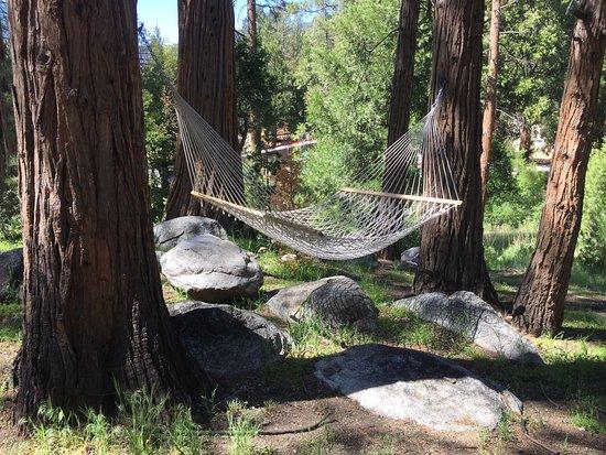 Idyllwild, CA: One of the Hammocks