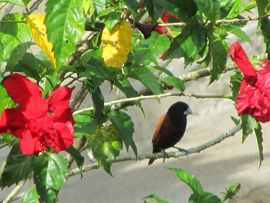 Catarman, Filipiny: Birds and flowers