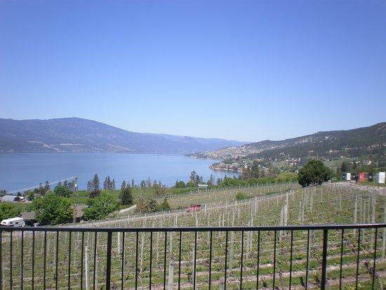 Gray Monk Estate Winery: Blick von der Terrasse