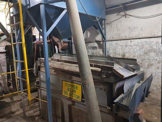 Ujarras, كوستاريكا: coffee bean selector machine