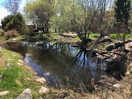 a small pond foto di trochu arboretum gardens trochu