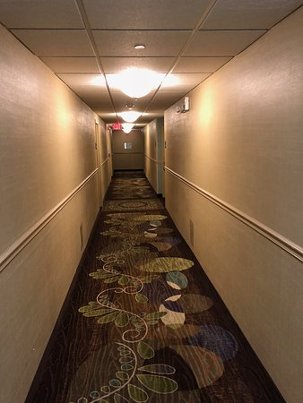Holiday Inn Express St. Louis Central West End: Dim, un attractive, smelly hallways.